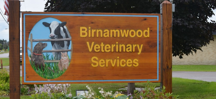 birnamwood veterinary services
